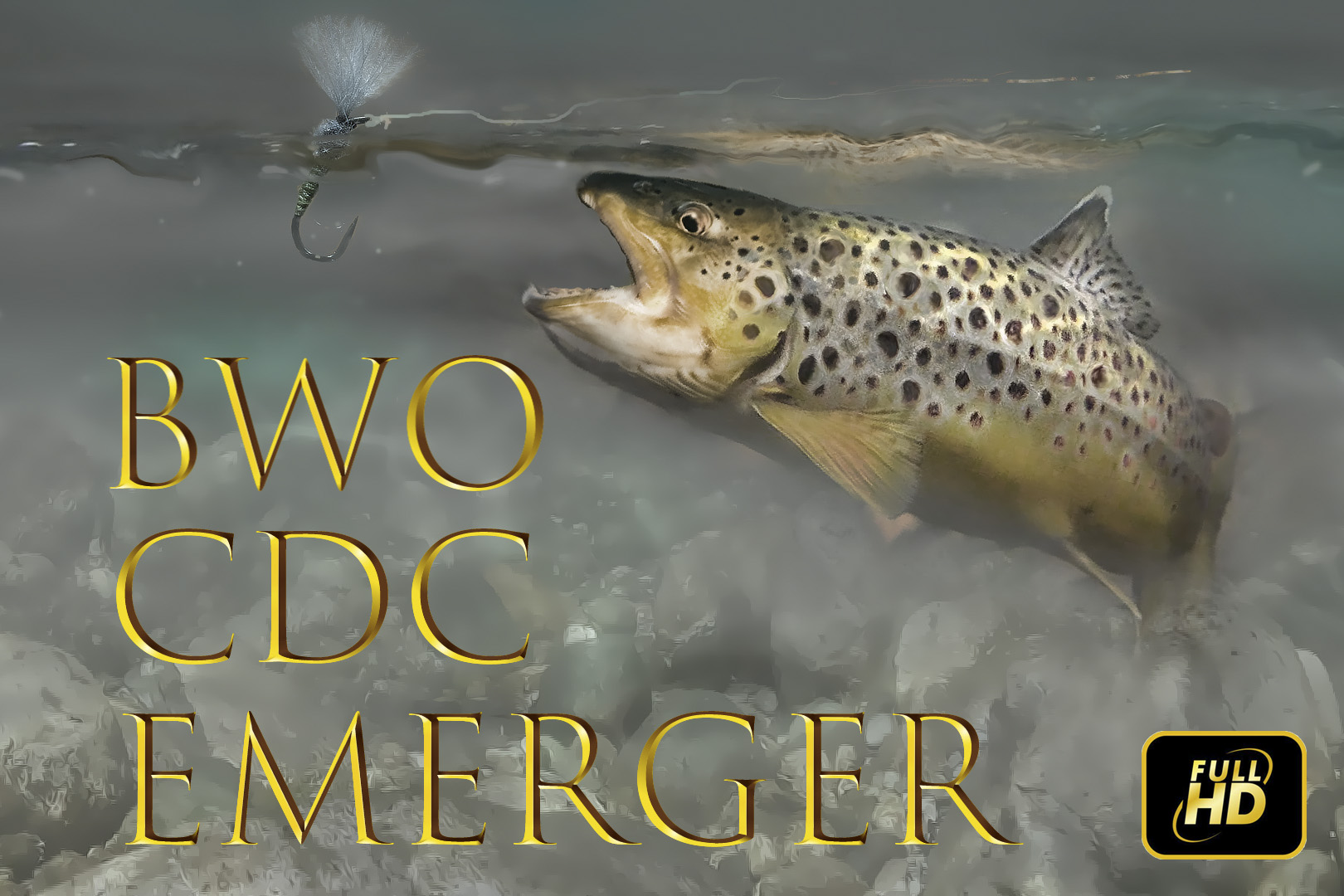 BWO CDC Emerger