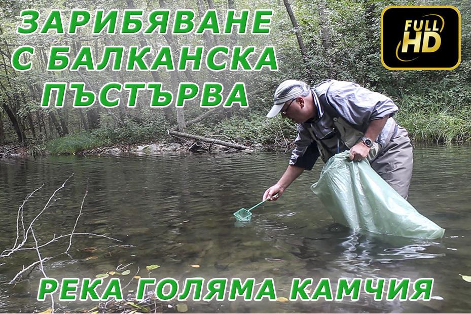 Зарибяване с балканки на река Голяма Камчия