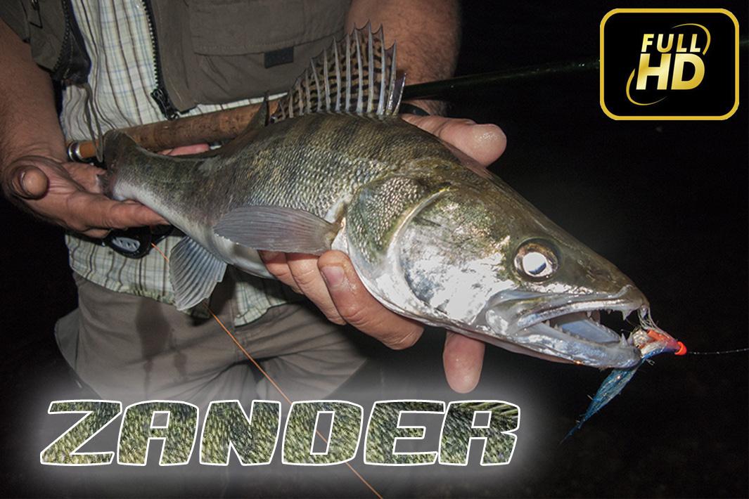 Бяла риба на муха - река Дунав