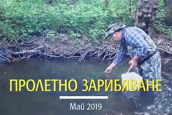 Пролетно зарибяване с балканска пъстърва на река Голяма Камчия - 2019